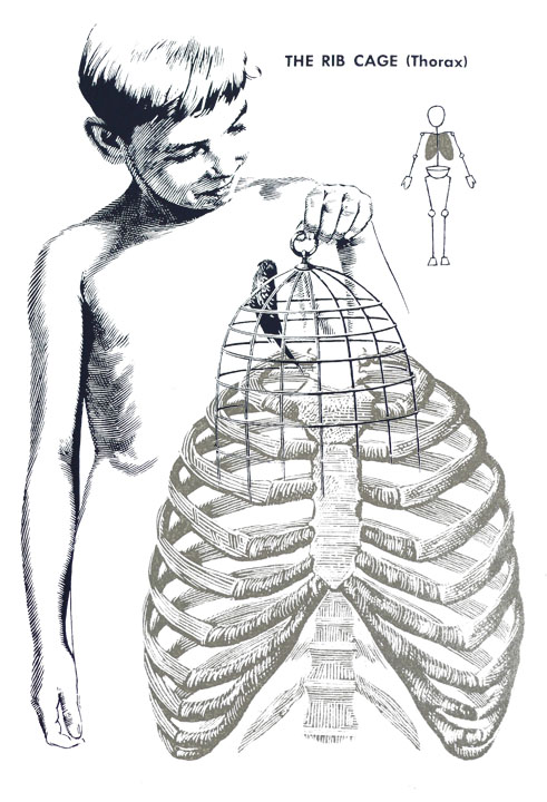 «Wonders of the human Body»